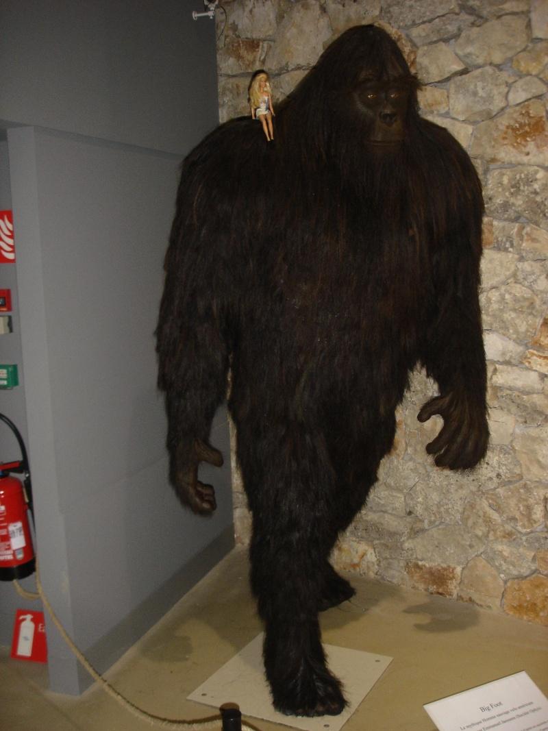 Musée de Préhistoire de Quinson Champi20
