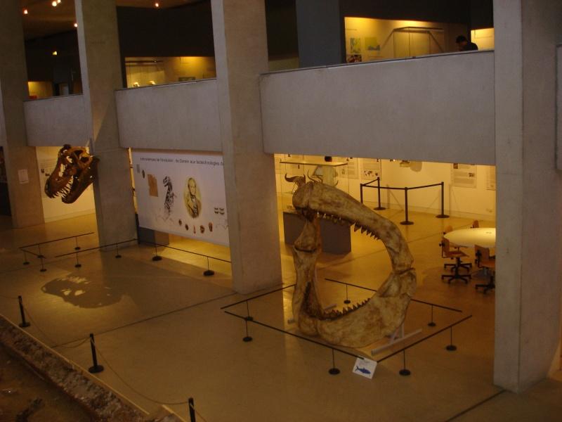 Musée de Préhistoire de Quinson Champi21