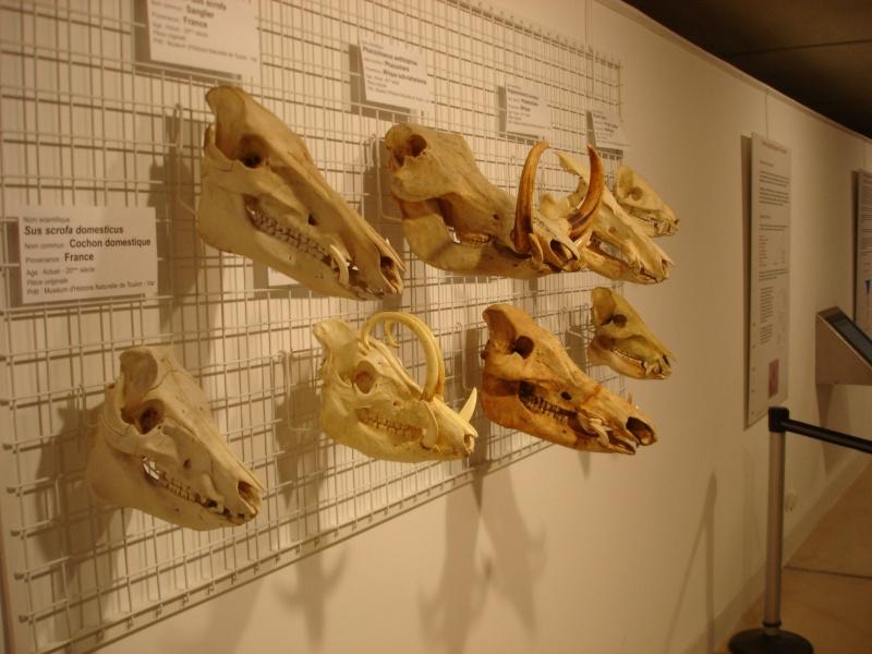 Musée de Préhistoire de Quinson Champi22