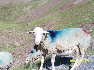 La Mongie, Tourmalet, Pic du Midi (Hte Pyrénées) 100_0323