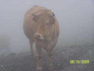 Les bébêtes des Hautes Pyrénées 100_0330