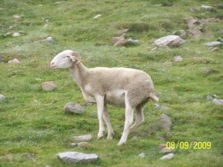 Les bébêtes des Hautes Pyrénées 210