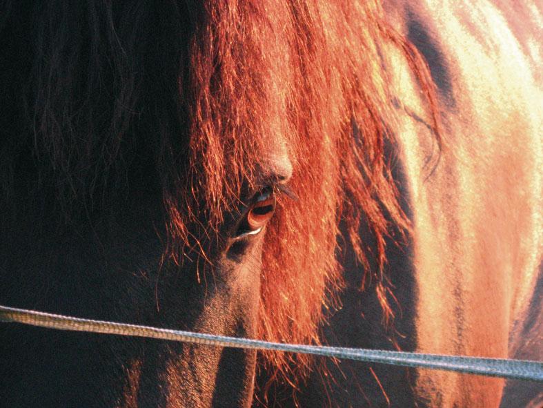 thème mai 2012: un bout de cheval !  - Page 4 Igorso14