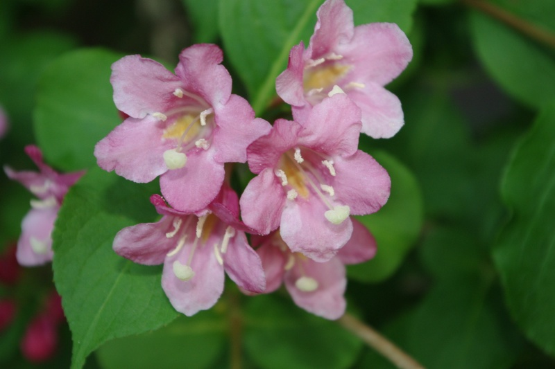 floraison printaniere Imgp0788