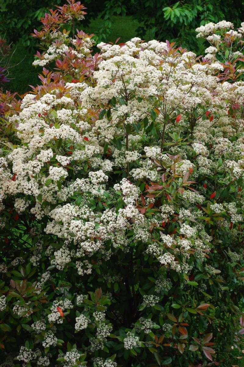 floraison printaniere Imgp0821