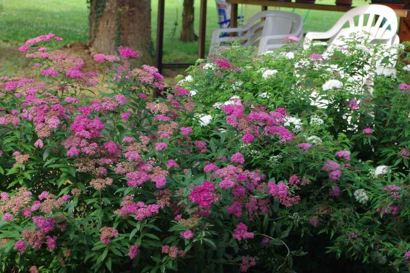 floraison printaniere Imgp1232