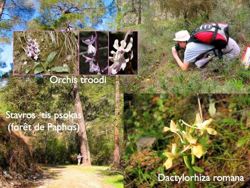 Chypre 2007 : mise à jour 2012 avec des photos Chyp3_10
