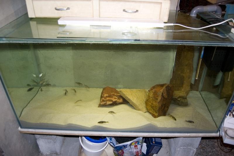 nouvel aquarium a la maison Dsc_7311