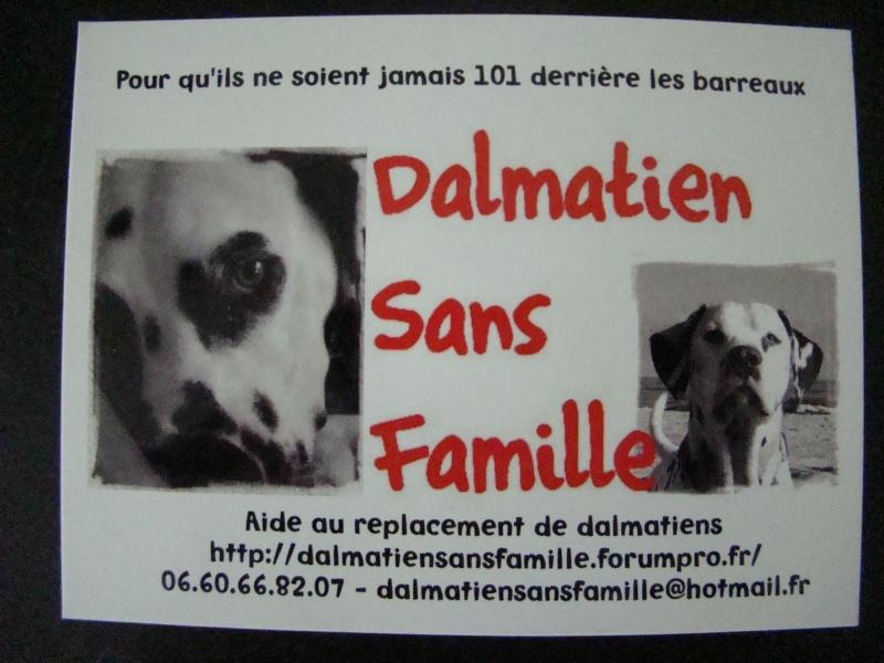 Ouverture de la boutique en ligne. Dalmatien sans famille Dsc01513
