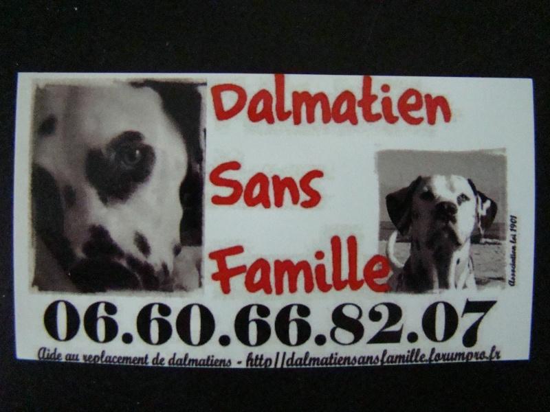 Ouverture de la boutique en ligne. Dalmatien sans famille Dsc01514