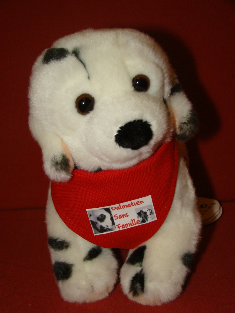 Ouverture de la boutique en ligne. Dalmatien sans famille Dsc01610