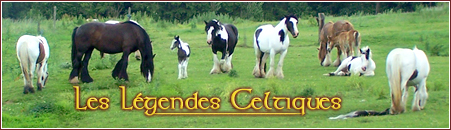 TEMPS DE GESTATION IRISH COB Signat10