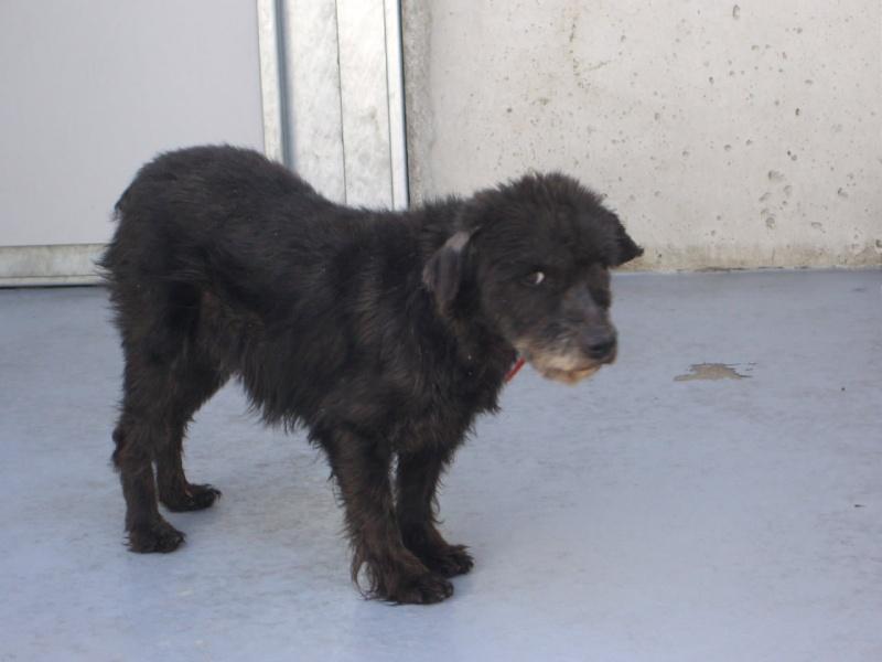 Mora,viejecita pequeña,11 años,perrera  Mostoles Img_0610