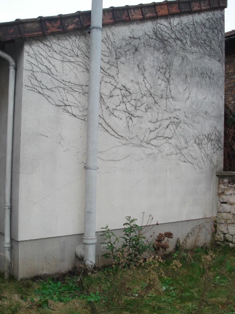 ma maison est une eponge Dsc01911