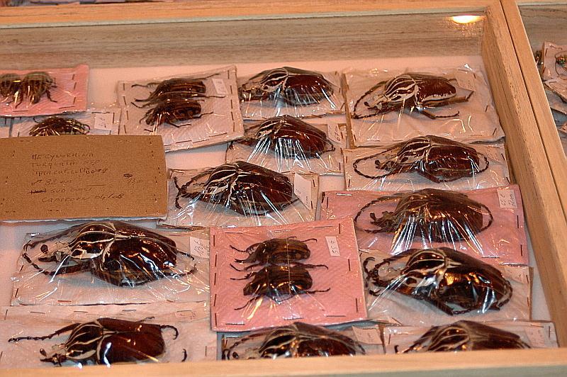 [Bourse] reptilexpo 2009 Arras_28