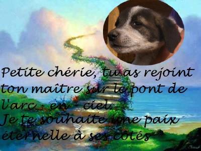 Eclair, petit chiot (femelle) chien de tina Pont_d12