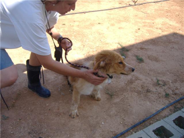 LEA, cachorrita tamaño grande, 5 meses valencia Cvlea10