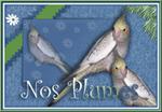 Histoires de plumes : forum sur les oiseaux d'élev - Portail Nosplu11