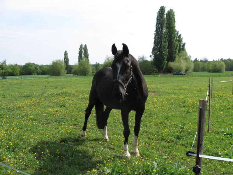 Quelques chevaux... Cheval10