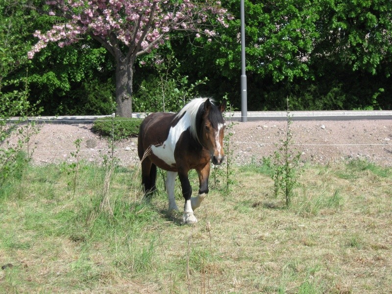 Quelques chevaux... Cheval13