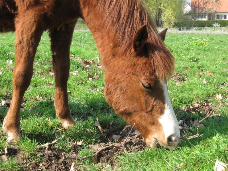 Quelques chevaux... Chevau11