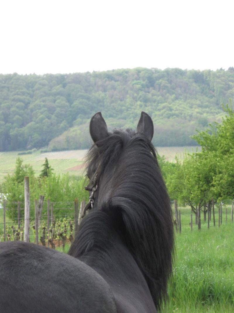 Quelques chevaux... Chval_14