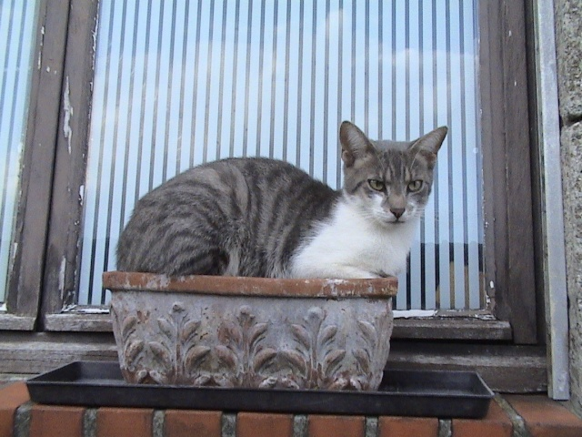 Yeux de chats Arbrea11
