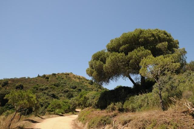El hallazgo de Puig Castellar Barcel14