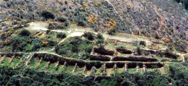 El hallazgo de Puig Castellar Puigca10