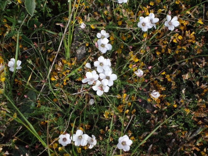 Zutt!! J'ai oublié son nom (fleur, plante,animal...) Dsc01010