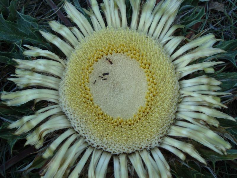 Zutt!! J'ai oublié son nom (fleur, plante,animal...) Dsc01226