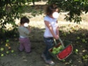 les pommes Img_0818
