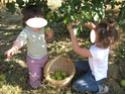 les pommes Img_0819