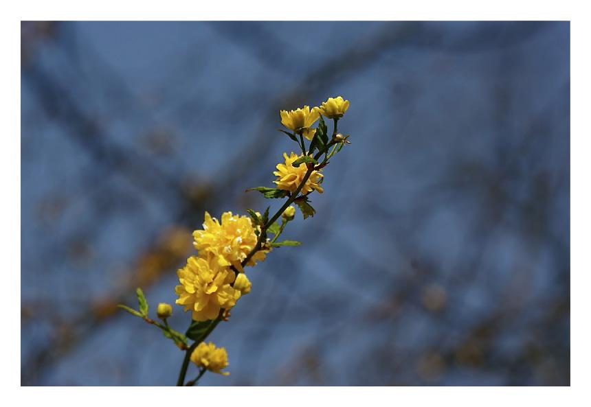 Le printemps est arrivé à Bxl Img_5032