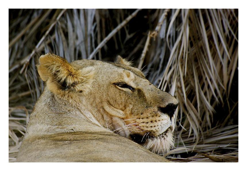 The lion sleeps tonight Img_6219