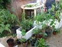 Bourse aux plantes du JB de Nice Plante10