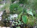 mon bassin Plante21