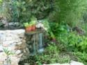 mon bassin Plante22