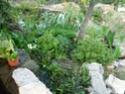 mon bassin Plante23