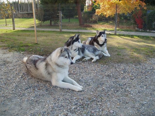 """Concours de la photo de chiens la plus """"belle"""" Les_3_11"""
