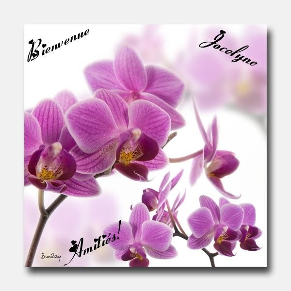 Bienvenue  à Jocelyne Orchid10