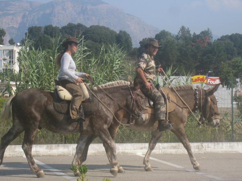 Une ballade énorme avec au moins 200 chevaux sur  Ajaccio Rando_51