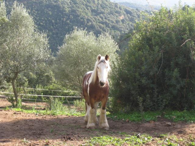 Juste pour vous donner envie de venir en Corse Romer107