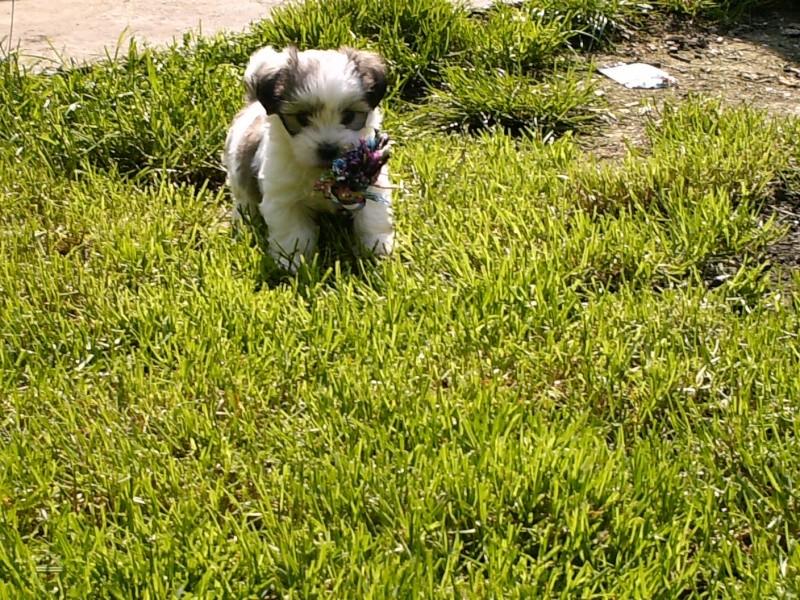 voila mes chiens - Page 2 Hpim0812