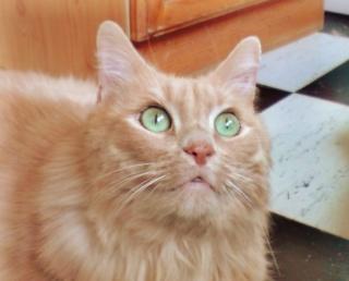 Comment enlever les noeuds dans une fourrure de chat ? P0805010