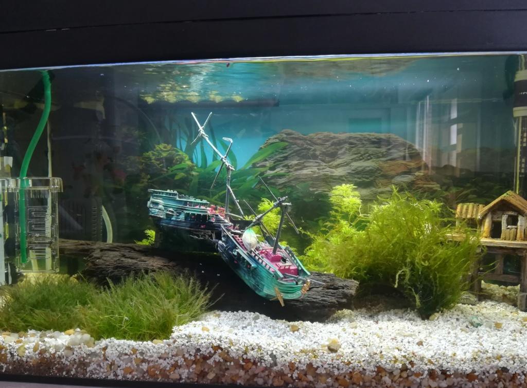 Présentation de mon aquarium 54 litres Img_2010