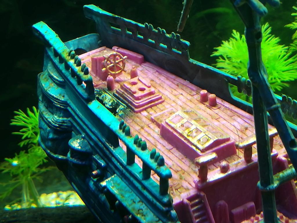 Présentation de mon aquarium 54 litres Img_2012