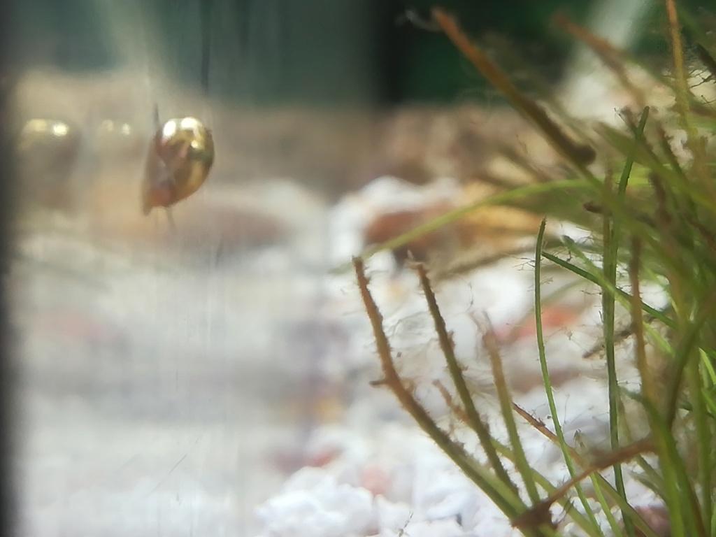 Présentation de mon aquarium 54 litres Img_2013