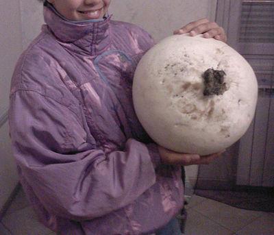 Surprise: il tombe sur un champignon... de plus de 5 kilos 400px-10
