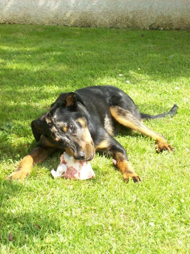 chien heureux sans jouets!! 100_1511